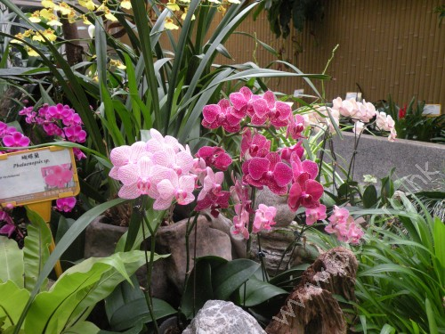 Eelderly Barrier Free Travel Hong Kong Zoological And Botanical Gardens The Green House